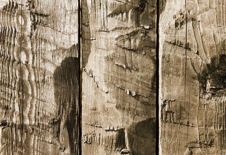 Old Wood Background. Old wooden planks. photo