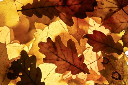 Autumn background from the fallen down leaves. photo