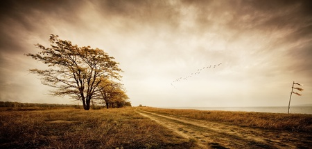 migrating animal: Autumn. Birds of passage. Sepia Toned.
