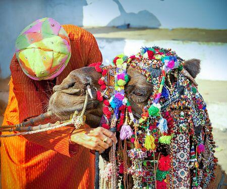 Decorated camel at the Pushkar fair, Rajasthan, India, Asia
