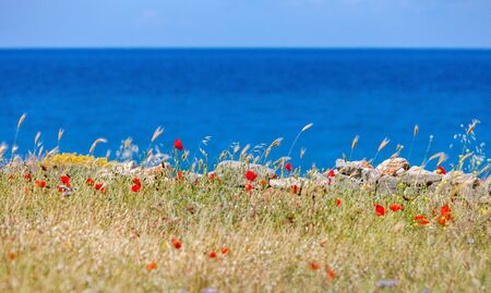 Wild red poppies in the mountains of Crete on a background of blue sea