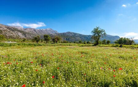 Cretan landscape, Lassithi plateau with a spring field covered with daisies and poppies, Crete, Greece. Banco de Imagens