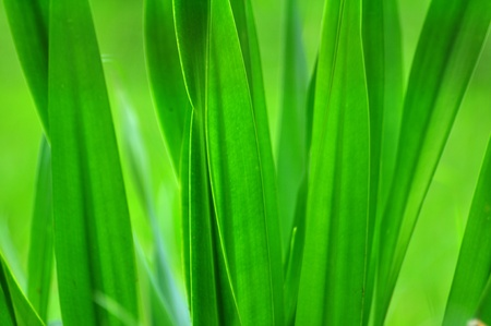 green long leaf background Stock Photo - 10604223