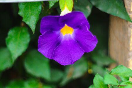 01: blue blooming flower 01