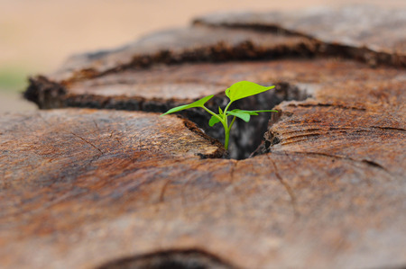 01: young spring leaf from stool wood 01