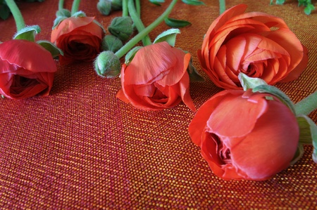red ranunculus flowers on a silken woven  cloth photo