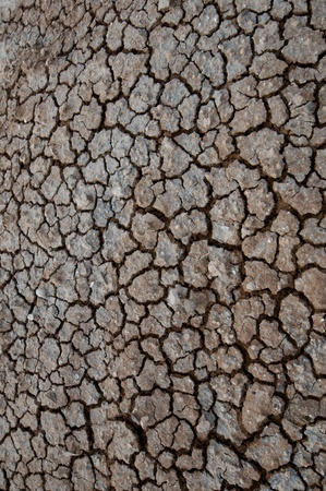 nature -designed pattern on a muddy road photo