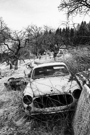 junkyard: Franc�s viejo coche, oxidado y da�ado en la naturaleza en blanco y negro