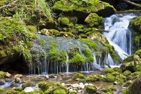moos: Small Waterfall in forrest with moos on rocks