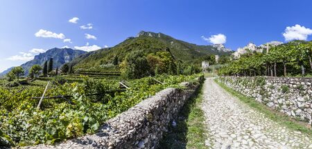Road from town Sabbinoara to castle of Avio through vineyard in Etschtal in Italy, Europe Stock Photo