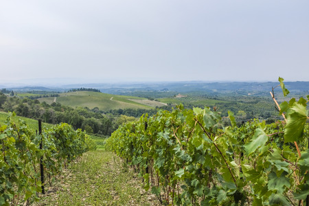 View over the hills with vineyards near castle Brolio in beatiful Tuscany in Italy Stock Photo