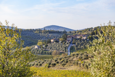 Old farm on a hill with vineyards near Chastellina in Chianti in the golden hour in Tuscany in Italy