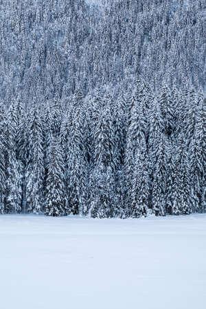 Snow covert forest near frozen lake Fusine in winter