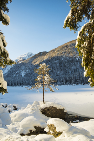 Small tree on rock near snow covert and frozen lake Fusine in Italy Stock Photo