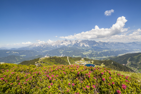 Aerial view from mountain Gasselhoehe and Rippetegg with flower Alpenrose to blue lake and distant mountain  range Dachstein in Austrian Alps Stock Photo