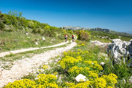 Two mountain biker driving on gravel road in Istria near Rabac to mountain Sisol in Ucka Park in Croatia, Europe with flowers Italian strawflower, Immortelle in foreground