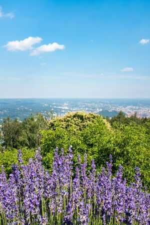 Panoramic view from view-point Fuerstenstand on mountain Plabutsch to violet blooming salvia with town Graz in the background on a sunny summer day in Styria, Europe Stock Photo