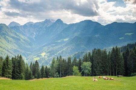 View over pasture with cows to Logarska valley and mountain range Kamnik–Savinja Alps in Slovenia, Europe