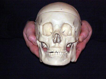 hands holding skull