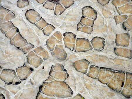 rock with fossilized plants