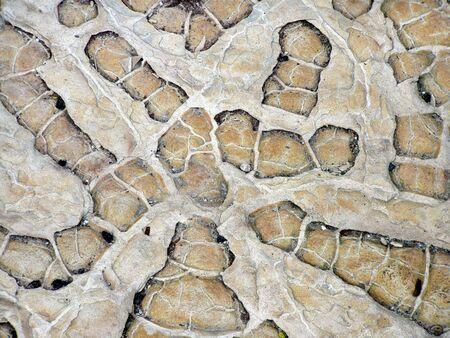rock with fossilized plants Banco de Imagens - 900289