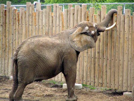 zoo elephant        Banco de Imagens