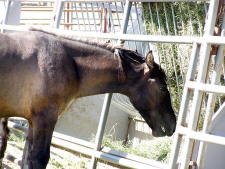 horse in a cage    Banco de Imagens