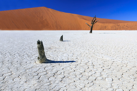 Dead acacia trees in Sossusvlei Pan, Namibia photo