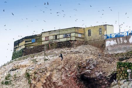 fauna: La casa de guano colector en Islas Ballestas Per�. Estas islas son un importante santuario para la fauna marina, como el ave guano guanay el piquero y el zarcillo Bluefooted Editorial