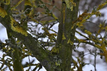 Lichen in the snow Stok Fotoğraf