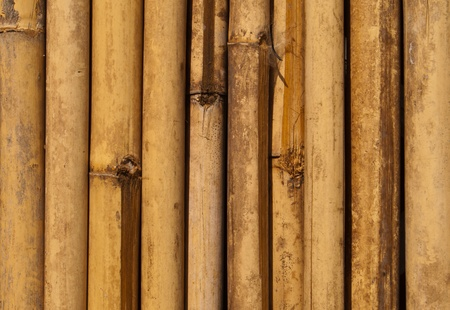 Bamboo pattern  photo