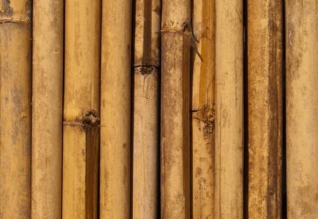 Bamboo pattern  photo