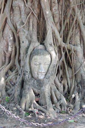 Tree root at mahathat Wat Ayutaya Stock Photo - 7235954