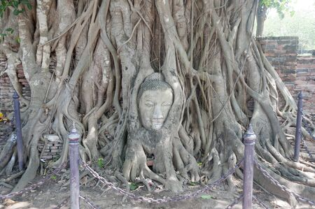 Tree root at mahathat Wat Ayutaya  photo