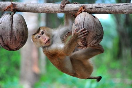 Monkey  写真素材