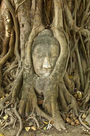 incienso: piedra de Buda cabeza en las ra�ces de los �rboles, Ayutthaya es la antigua capital de Tailandia  Foto de archivo