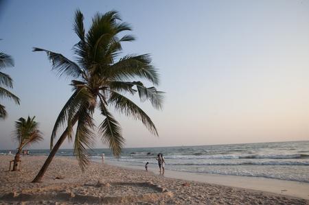 Coconut tree at beach  photo