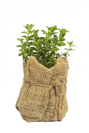 Young plant in Planting bags. over white  photo