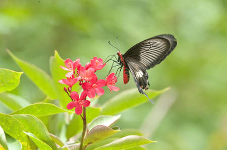 Butterfly and flower Stock Photo - 9982944