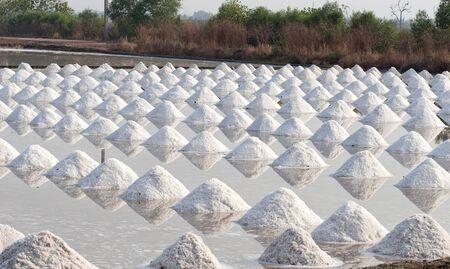 saline in samut sakorn, thailand Stock Photo - 14749869