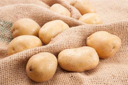 russet potato: Raw Potato Straight from Garden closeup on Sacking background