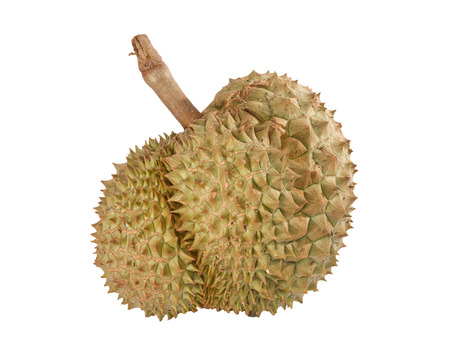 king of thailand: durian,king of fruit form thailand,