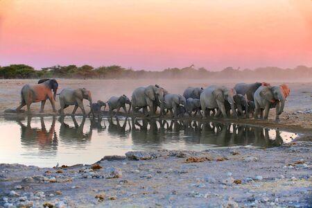 pozo de agua: una manada de elefantes en el Parque Nacional de nafta Foto de archivo