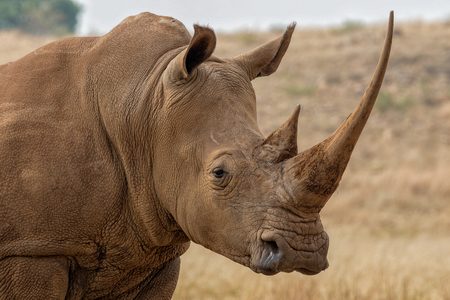 White Rhino South Africa