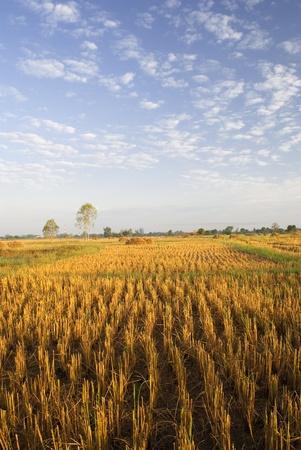 folkways: the season harvests in Thailand