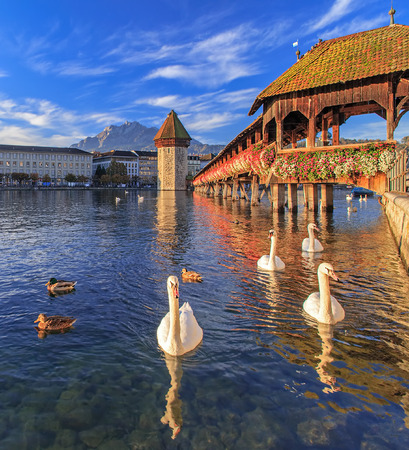 Swans on the Reuss river at the Chapel Bridge German: Kapellbrucke in autumn morning in Lucerne, Switzerland. Mt Pilatus in the backround. Stock Photo