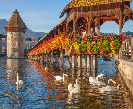 Zwanen bij de beroemde Kapelbrug over de rivier de Reuss in de stad Luzern, Zwitserland.
