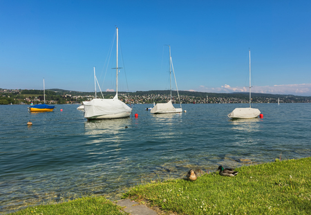 Lake Zurich in Switzerland, view from the city of Zurich at the beginning of May. Stock Photo