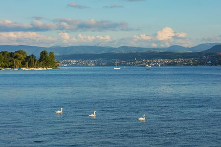 Lake Zurich at sunset in summer, summits of the Alps in the background, view from the city of Zurich.