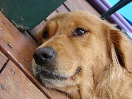 犬のコテージのデッキでリラックス